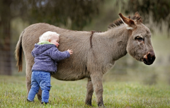 donkey love.png