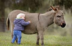 donkey love.png
